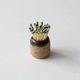 S|H Ceramic Matchstick Holder