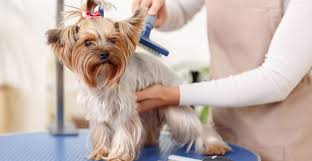 Can you Learn Dog Grooming Online?