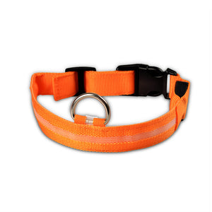 Dog Collar: Night Safety LED Fluorescent Glow Collar