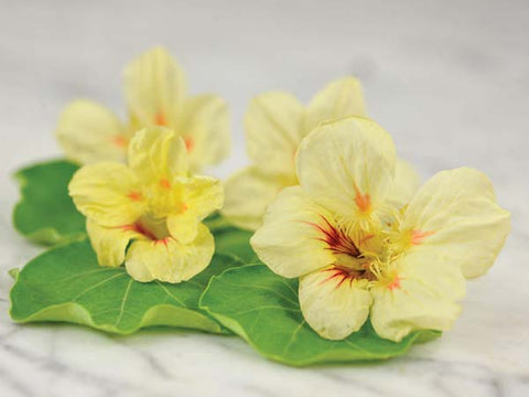 Jewel Peach Melba - Nasturtium (25 seeds)