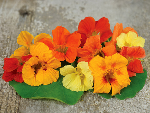 Tall Trailing Mix Nasturtium (25 seeds)