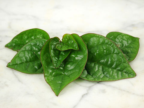 Image of Red Malabar Spinach (35 seeds)