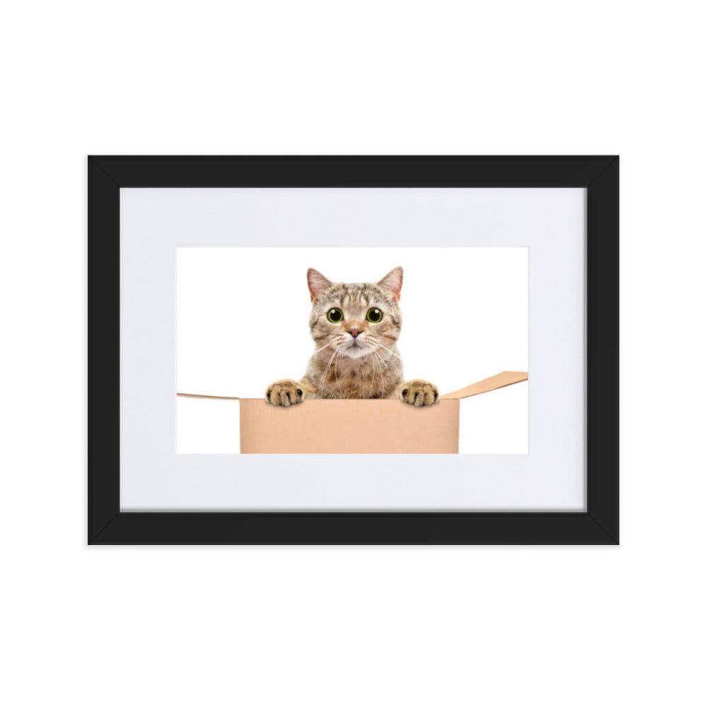 Cat in the Box Framed Poster With Mat