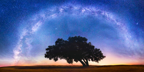 Milky Way over a tree in the Palouse Washington by Lijah Hanley.