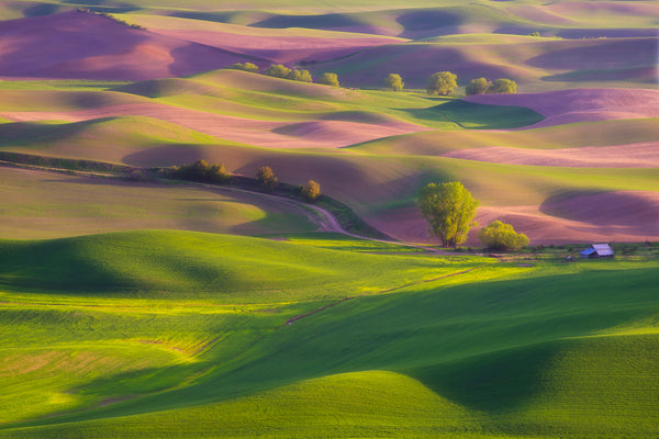 Fine art photography of rolling hills in the Palouse Washington by Lijah Hanley.