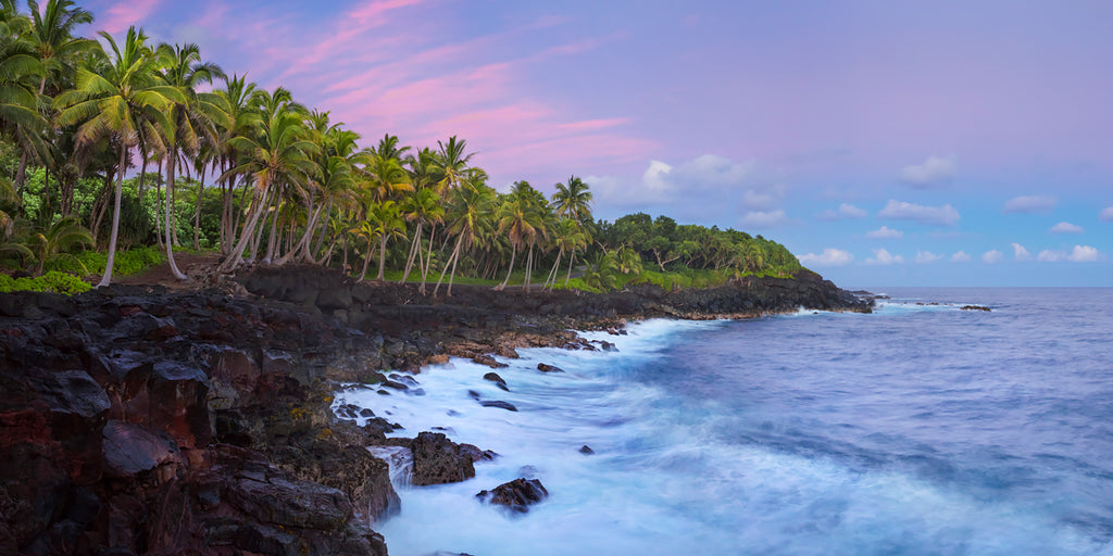Fine art photography of palm trees along the puna coast in Hawaii.