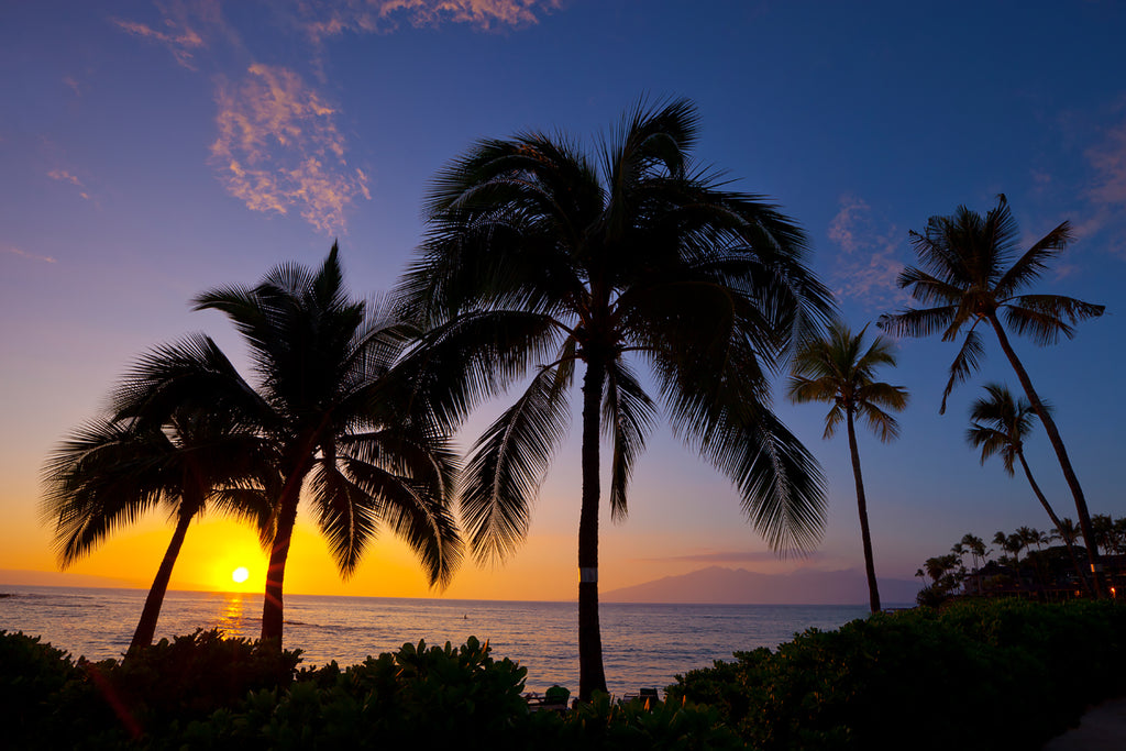 Fine art photograph of palm trees at sunset in Maui, Hawaii.