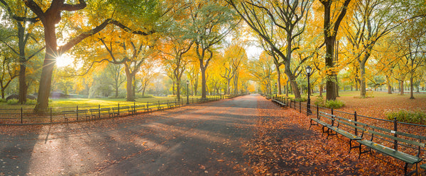 central park new york autumn lijah hanley