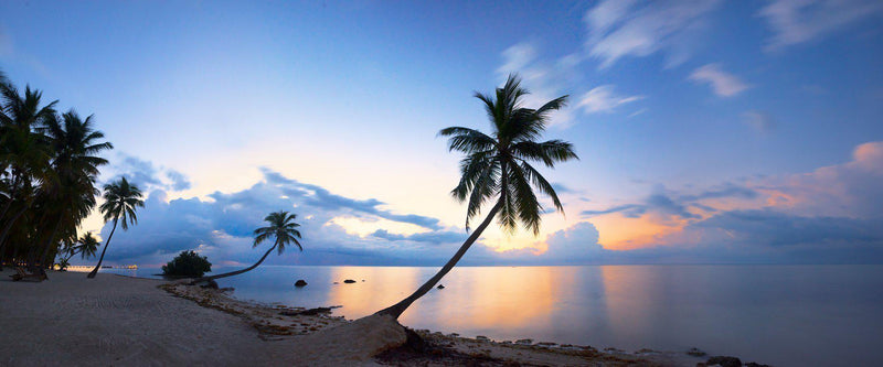 Photograph of palm trees at sunrise in the florida keys.