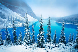 Snowy trees against Moraine Lake