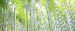 """Bamboo Forest"""