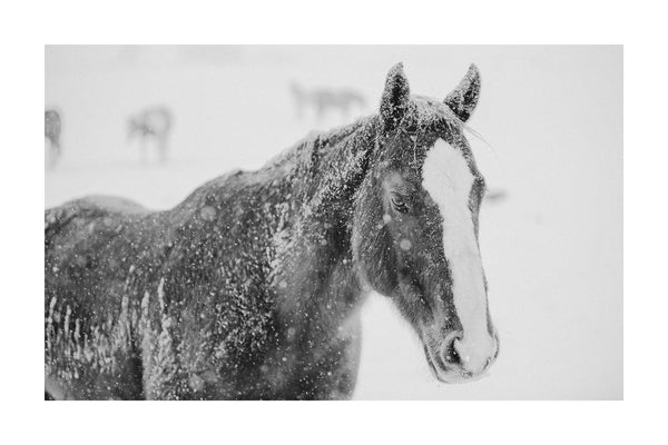 Fine art black and white horse photography by Lijah Hanley.