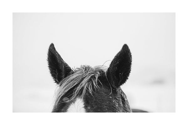 Fine art horse photography in black and white.