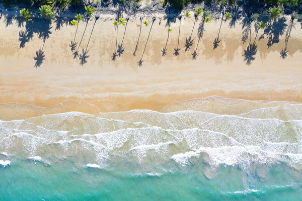 An arial of a beach lined with palm trees in Australia