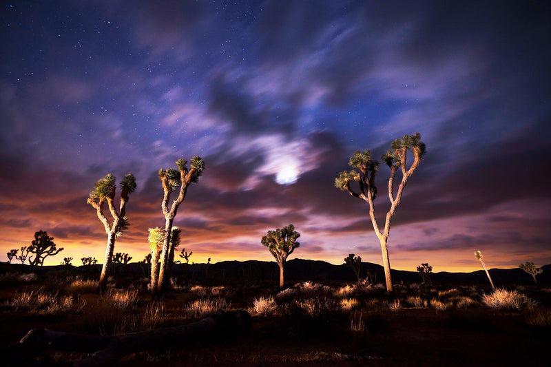 A moody night in Joshua Tree National Park