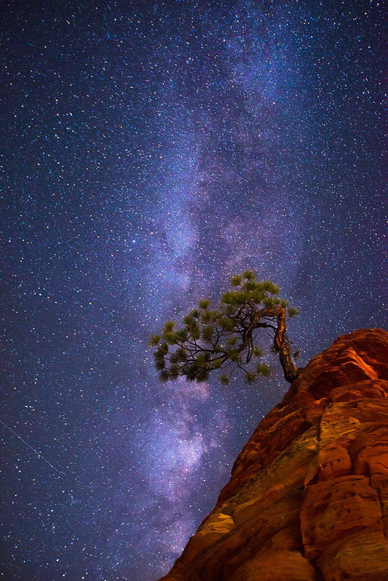 A juniper tree on top of red rock under the Milky Way in Zion