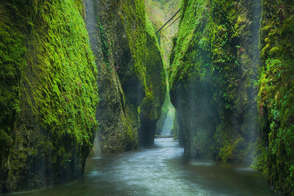 A green canyon in the Columbia river gorge in Oregon