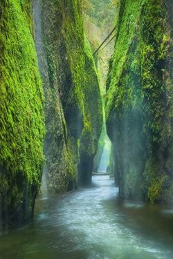 A green mossy canyon in the Columbia River Gorge in Oregon
