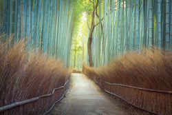 Bamboo Forrest in Kyoto Japan