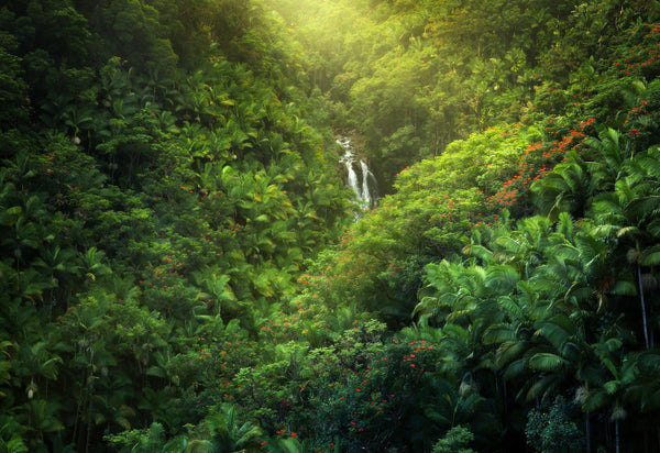 Hawaiian landscape photography by Lijah Hanley. A lush waterfall surrounded by palm trees on the big island of Hawaii.