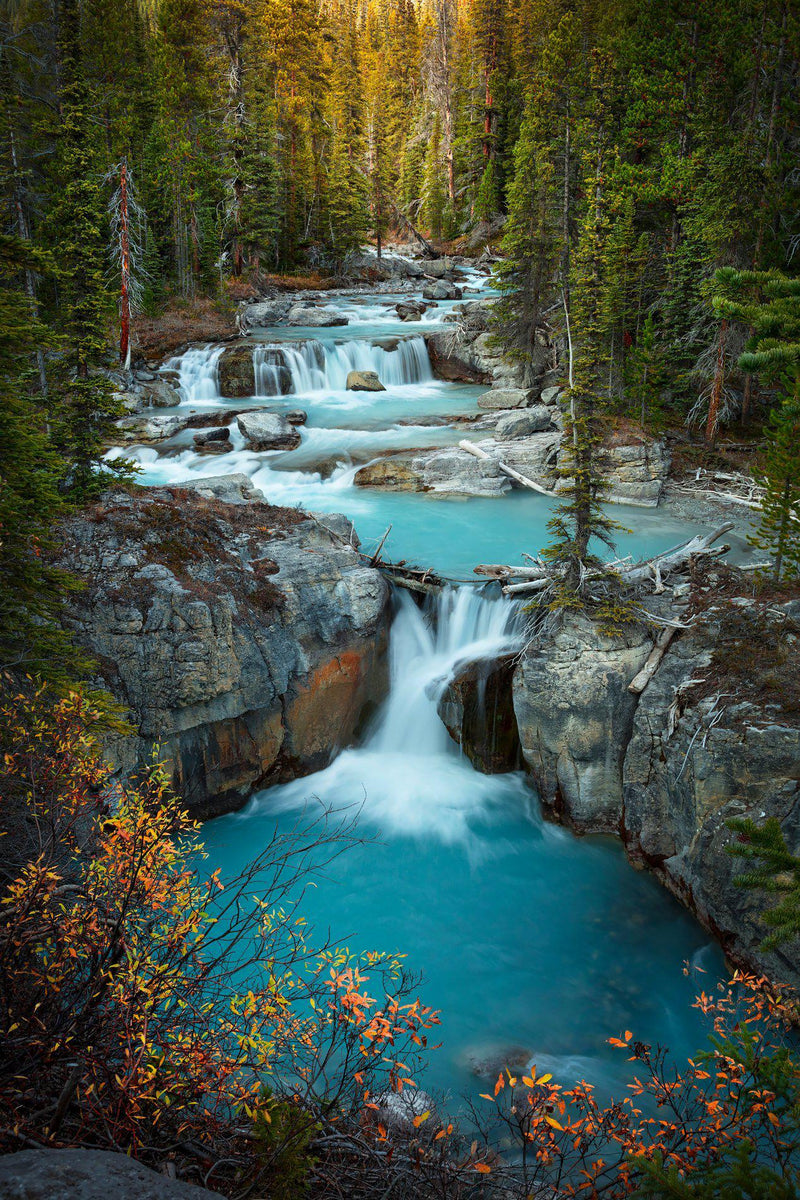 A waterfall surrounded by fall color in Jasper Canada