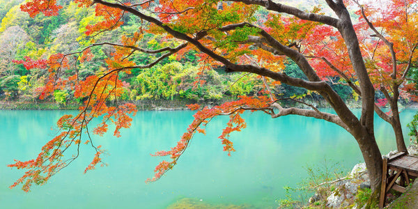 Fall color along the Katsura River in Kyoto, Japan by Lijah Hanley.