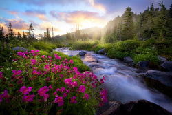 Paradise creek and pink flowers in mount rainier national park. By Lijah Hanley.