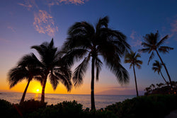 Palm trees on maui at sunset. By Lijah Hanley.