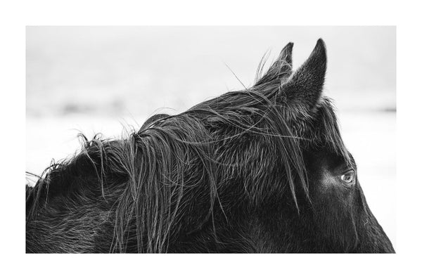 Fine art horse photography in black and white by Lijah Hanley.