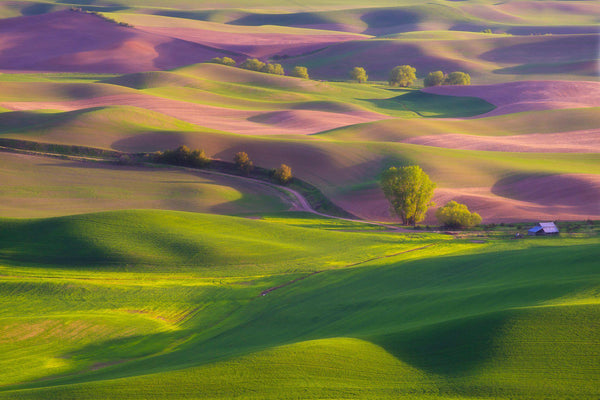 Rolling hills in the Palouse Washington