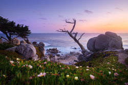 Pebble Beach in Carmel California at sunset