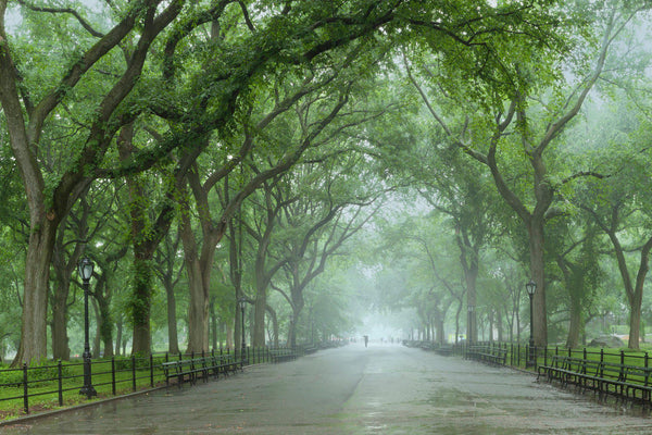 Central Park on a misty spring morning. By Lijah Hanley.