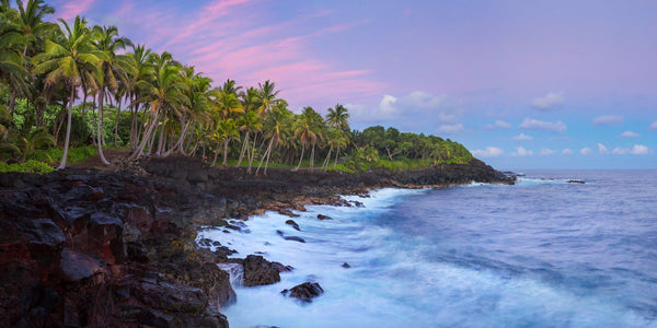Photograph of Palm trees along the Puna coast on the Big Island of Hawaii.