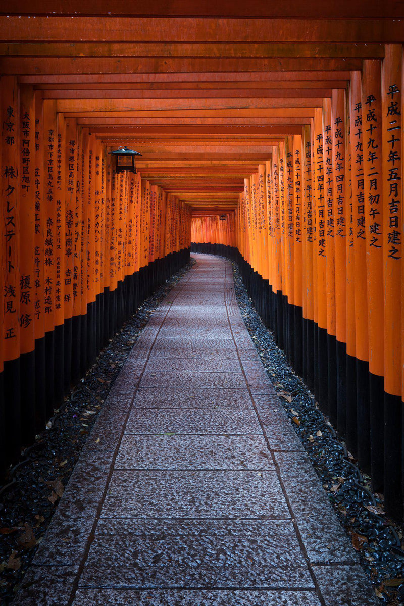 Torii gates at fushimi inari in kyoto japan. By Lijah Hanley.