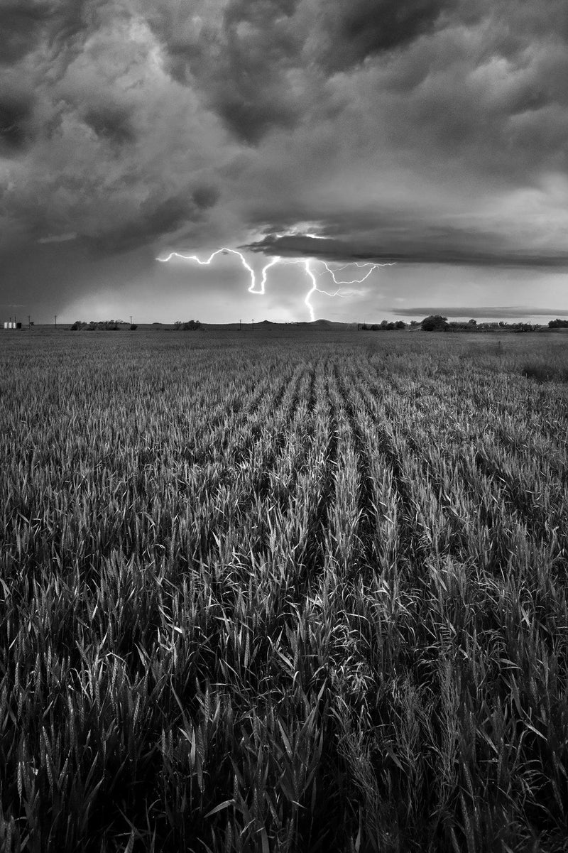 Rows of crops and lightning in Amarillo, Texas. By Lijah Hanley.