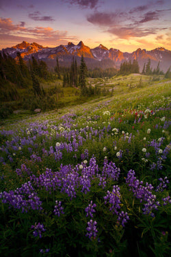 Tatoosh Range with wildflowers in Mount Rainier National Park. By Lijah Hanley.