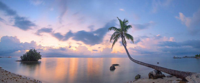 Photograph of a palm tree in the Florida Keys at sunrise.