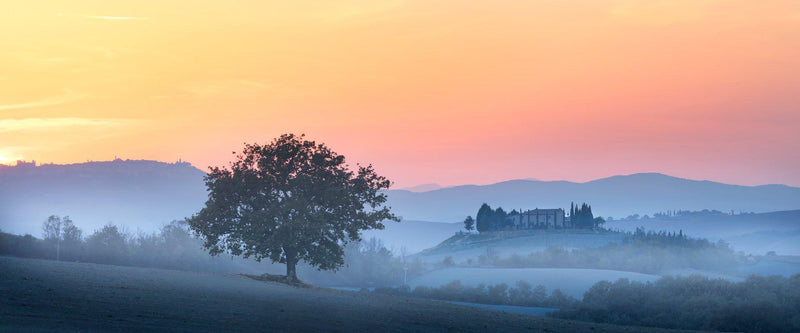 Photograph of fog and a tree in San Quirico d'Orcia, Italy in Tuscany.