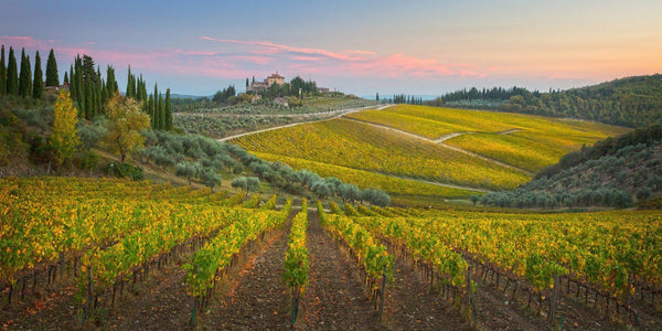 Photograph of vineyards in Tuscany, Italy.