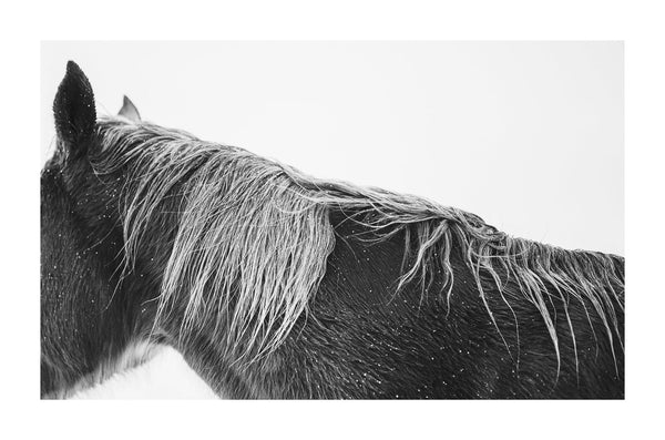 Fine art black and white photograph of horses in the snow by Lijah Hanley.