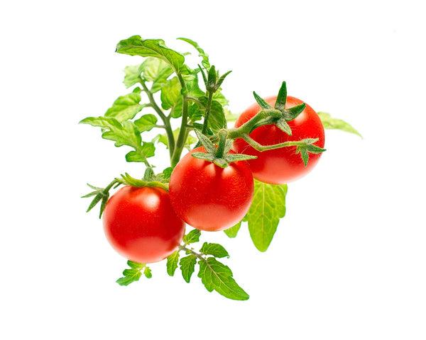 mini tomato, indoor garden, tips and tricks for gardening