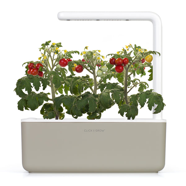 click and grow tomato plant