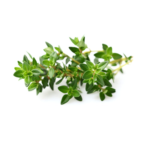 Click & Grow Thyme against a white backdrop.