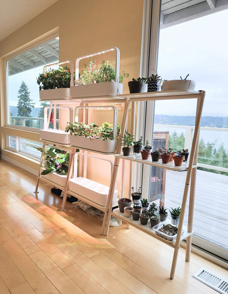 The Click & Grow Smart Garden 27 in a clean living space.