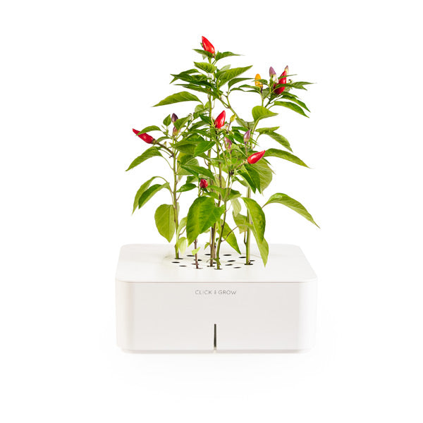 Click & Grow Chili Pepper