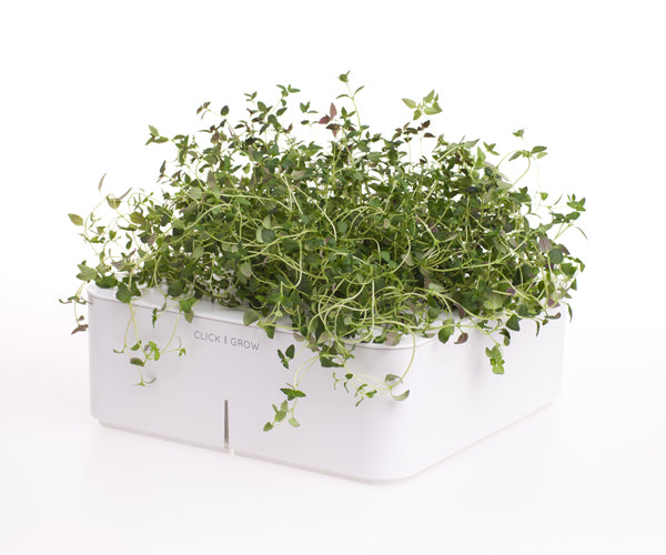 Click & Grow Thyme