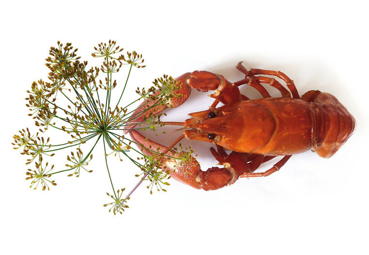 Lobster with dill