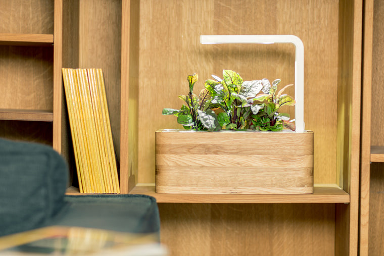 How To Make Your Indoor Garden Work For Your Home Interior | Click U0026 Grow  Blog