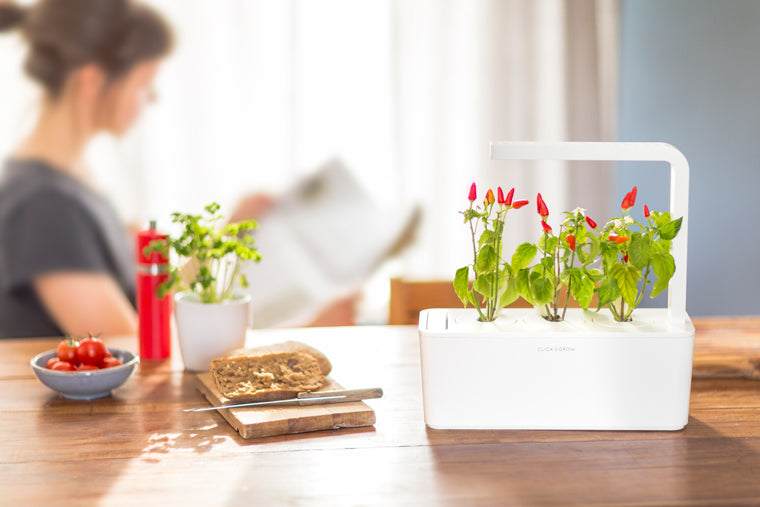 How To Make Your Indoor Garden Work For Your Home Interior | Click & Grow Blog