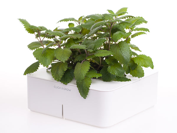 Click & Grow Lemon Balm